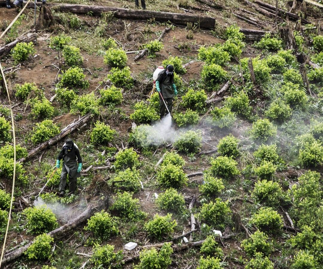 Colombia es el mayor productor de drogas de acuerdo con un informe realizado por la ONU